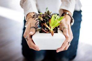 significado planta suculenta