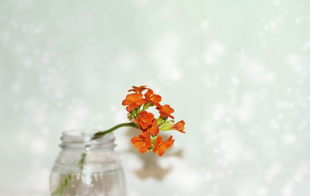 flor anaranjada del kalanchoe