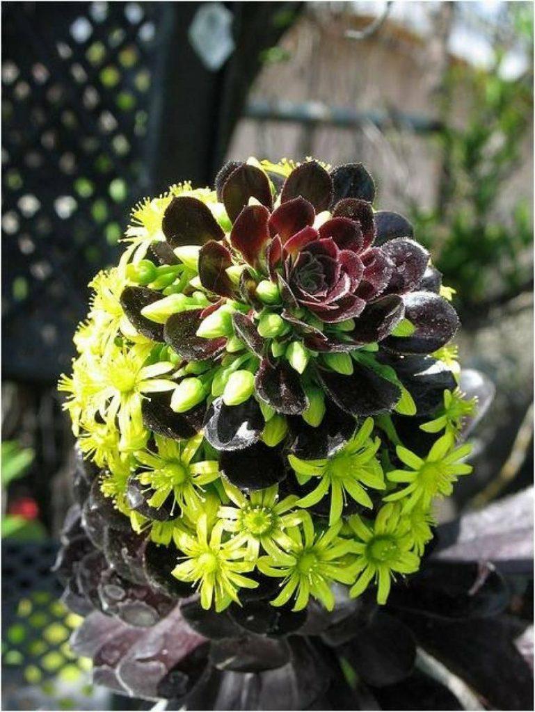suculentas flores verdes