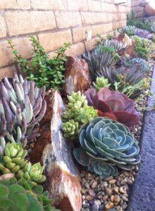 jardin suculentas exterior