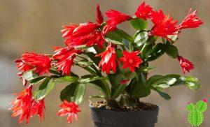 flores cactus planta