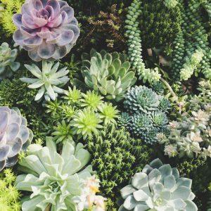 suculentas varias jardin exterior