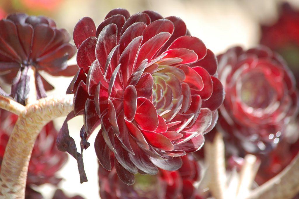 Plantas suculentas de colores 2